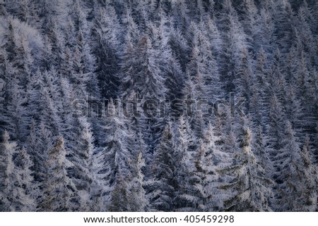 Cold snow covered tress - stock photo