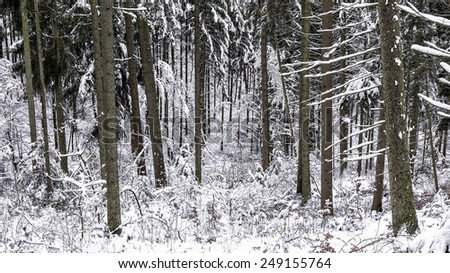 Cold snowy winter wonderland in the Black Forrest Region of Germany. Sweet Solitude. White and Lonely Landscape