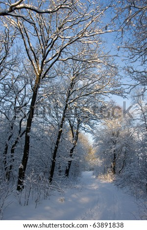 Cold sunny morning - stock photo