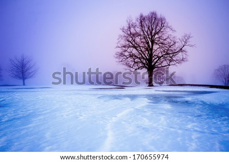 Cold winter landscape with trees and snow - stock photo