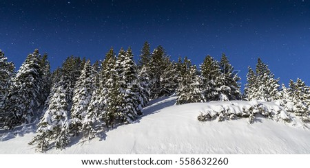 Cold Winter Snowy landscape with Pine Trees lit by moonlight.  Stars shine in the night sky.