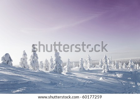 Cold winter with lot of snow and blue sky - stock photo