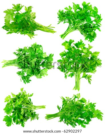 Collage (collection ) of Fresh parsley on white background. Isolated over white - stock photo
