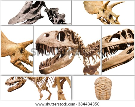 Collage composition of dinosaurs skeletons on white isolated background. - stock photo