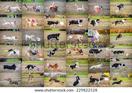 Collage dog frisbee - stock photo