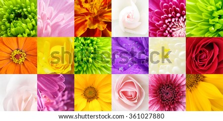 Collage flower - stock photo