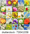 Collage from different beautiful flowers - stock photo