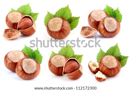 Collage from dried filbert - stock photo