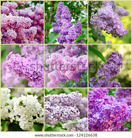 Collage from nine lilac spring flower images - stock photo