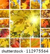 Collage from photos of beautiful autumn maple leaves - stock photo