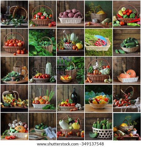Collage from still lifes with vegetables in a basket: cucumber, tomato, garlic, potatoes, pumpkin, vegetable marrow, pepper, eggplant, fennel, carrots, garden radish, onions. - stock photo