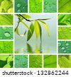 Collage from willow branch reflected in water and green lleaves - stock photo