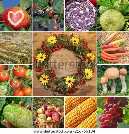 collage - fruits and vegetables, harvesting time, autumnal wreath in the middle - stock photo