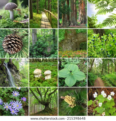 collage - in the forest. scenic woodland plants, flowers and trees. - stock photo