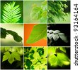 collage leaves - stock photo