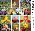 collage made of images from  Garden of Iris ( Giardino dell'Iris ), botanical garden cultivating iris flowers, place of international iris competition Premio Firenze Florence,Tuscany, Italy, Europe - stock photo