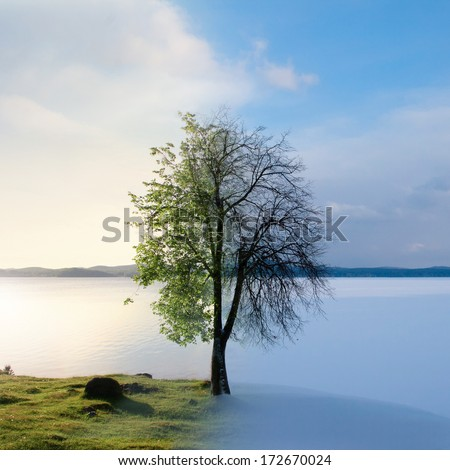 Collage mixing two photos of the tree by the lake in summer and winter time. Summer vs Winter. - stock photo