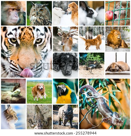 collage of beautiful colorful photos of different animals