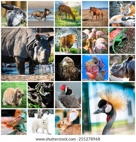 collage of beautiful colorful photos of different animals - stock photo