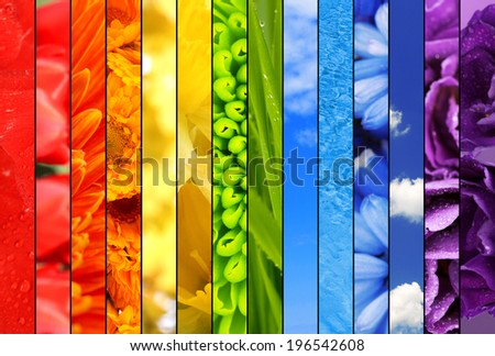 Collage of beautiful flowers,grass, sky and water - stock photo