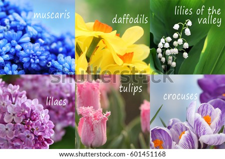 First of spring flowers names first spring flowers stock images royaltyfree images mightylinksfo