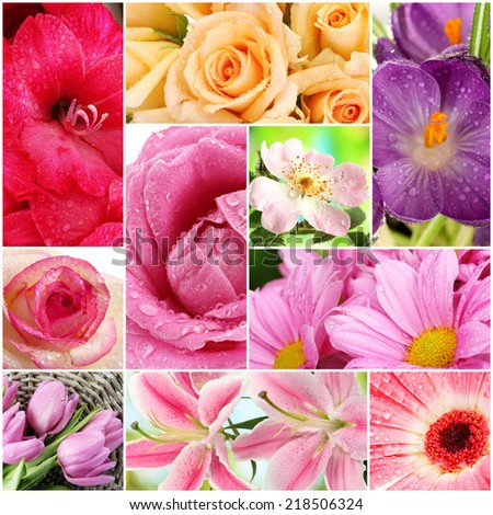 Collage of beautiful flowers with water drops - stock photo