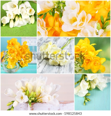 Collage of beautiful  freesias