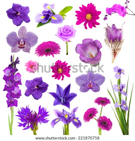 Collage of beautiful purple flowers - stock photo