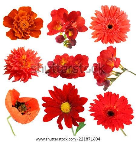 Collage of beautiful red flowers - stock photo