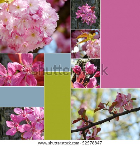 collage of beautiful spring flowers
