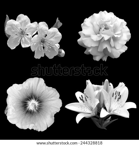 collage of black and white flowers rose, cherry, lily and hibiscus isolated on a black background