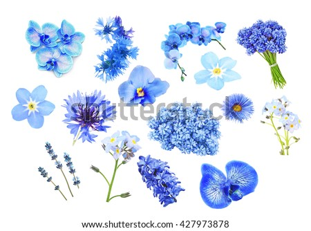 Collage of blue color flowers, isolated on white - stock photo