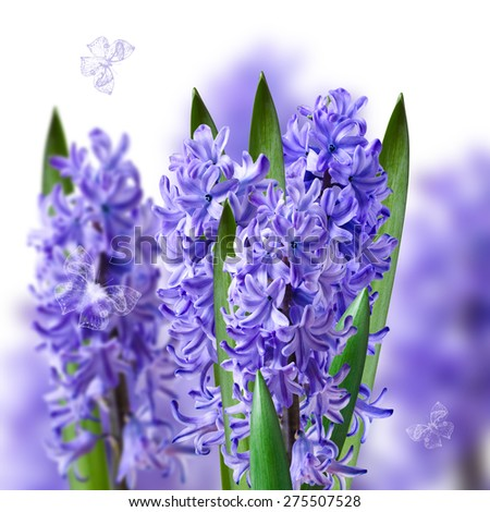 collage of bouquets of blue hyacinths with butterflies - stock photo