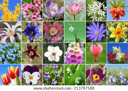 Collage of colorful flower heads - springtime flowers. - stock photo
