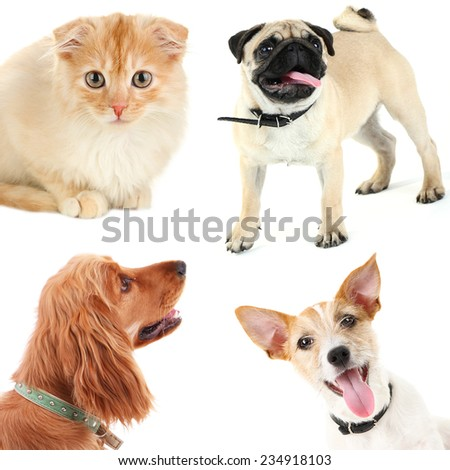 Collage of cute pets isolated on white