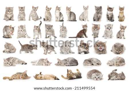 collage of cute small grey cats isolated on white  - stock photo