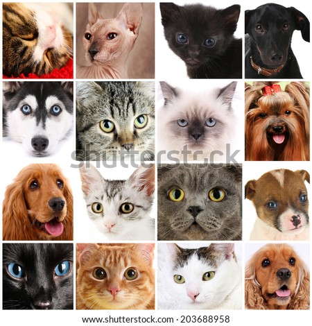 Collage of different cute pets - stock photo