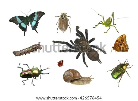 collage of different insects on white background isolated