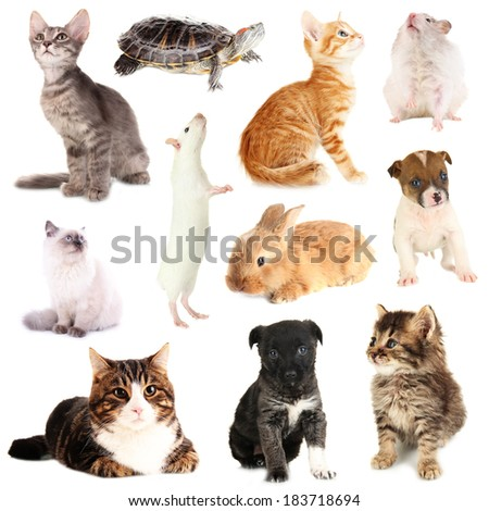 Collage of different pets isolated on white - stock photo