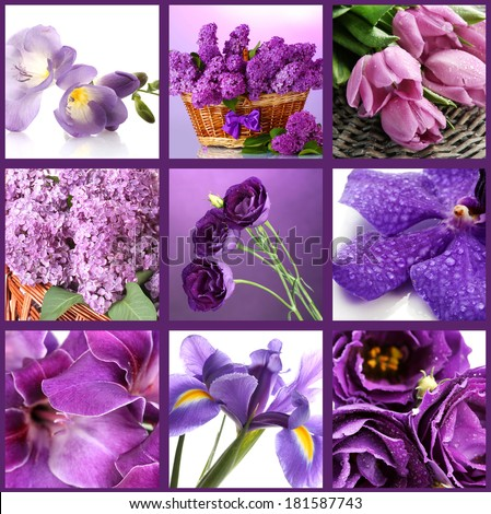 Collage of different purple flowers