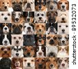 Collage of 36 dog heads - stock photo