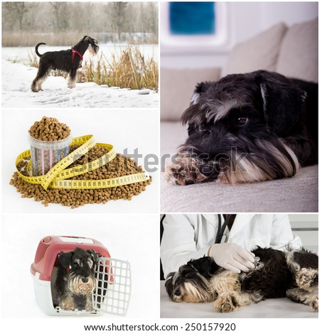 Collage of dog life images indoor and outdoor - stock photo