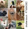 Collage of Farm Animals (single images are in my gallery) - stock photo