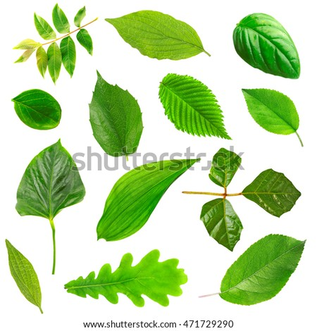 Collage of fresh green leaves on white background.