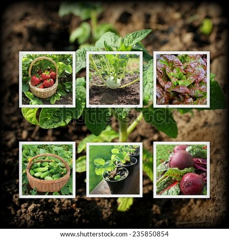 Collage of garden images - stock photo