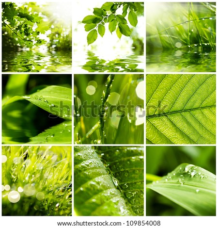Collage of green grass and leaves. Spring backgrounds - stock photo