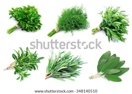 Collage of green herbs on white backgrounds.  - stock photo