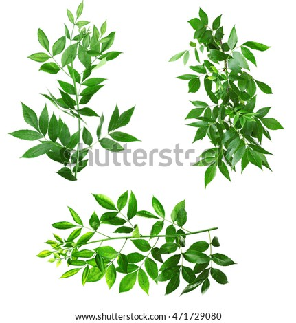 Collage of green leaves, isolated on white