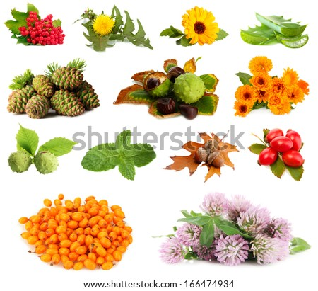 Collage of herbs and plants isolated on white - stock photo