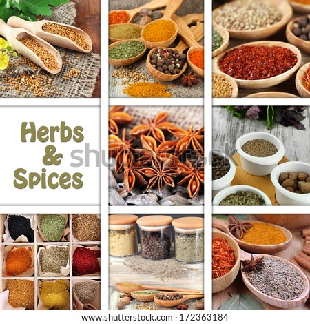 Collage of herbs and spices - stock photo